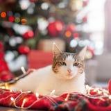 Кот около рождественской елки стоковое изображение rf