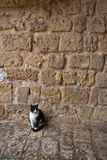 кот около стены Стоковое Изображение