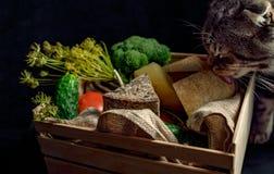 Кот около коробки с сыром kraft домодельным стоковая фотография rf