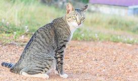 Кот дома (малая глубина поля) сидя на песке Стоковые Изображения RF