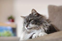 Кот дома стоковые фото