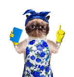 Кот домохозяйки Стоковые Фото