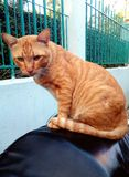 Кот оранжев сидит стоковые изображения