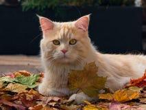Кот осени стоковое изображение