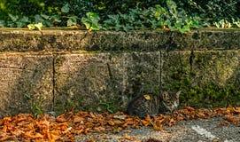 Кот осени Стоковая Фотография