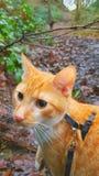 Кот осени Стоковое фото RF