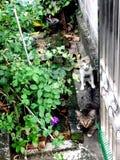 Кот ослабляет стоковая фотография