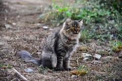 Кот оставаясь на земле стоковая фотография rf