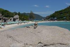 Кот острова Nangyuan Стоковые Изображения