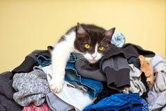 Кот ослабляя на прачечной Стоковые Фото