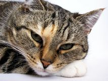 кот ослабляя Стоковые Изображения RF