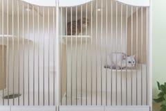 Кот отдыхая в cattery стоковая фотография rf
