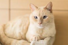 Кот отдыхая дома стоковые фотографии rf