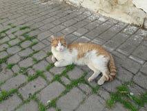 Кот от города Танжера Стоковое фото RF