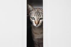 Кот от пробела Стоковое Изображение RF
