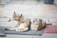 Кот очищает волосы Стоковая Фотография
