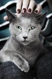 кот одичалый Стоковые Изображения