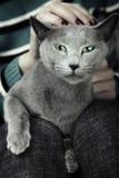 кот одичалый Стоковая Фотография RF