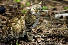 кот одичалый Стоковое Изображение
