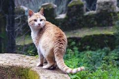 кот одичалый Стоковые Фото