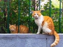 кот одичалый стоковое изображение rf