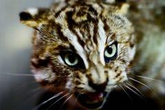 кот одичалый Стоковая Фотография