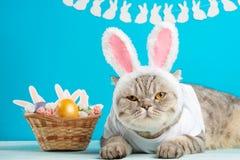 Кот пасхи с ушами зайчика с пасхальными яйцами Милый котенок стоковое изображение rf