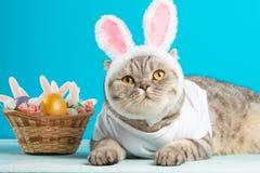 Кот пасхи с ушами зайчика с пасхальными яйцами Милый котенок стоковая фотография rf