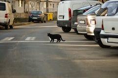Кот пересекая улицу стоковые фотографии rf