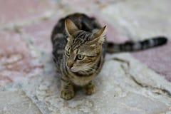 Кот переулка Стоковые Фото