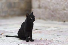 Кот переулка Стоковое фото RF