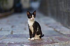 Кот переулка Стоковые Изображения RF
