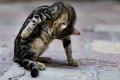 Кот переулка Стоковое Изображение