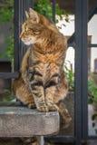 Кот переулка в солнце Стоковые Фото
