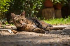 Кот переулка лежа в задворк Стоковое Изображение