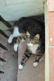 Кот переулка Стоковые Изображения