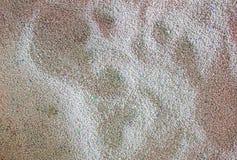 кот песка чистки кота туалета в коробке сора Стоковые Изображения RF