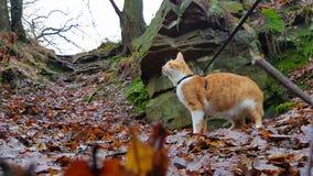 Кот пещеры Стоковые Фотографии RF