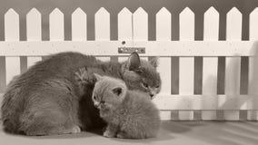 Кот подавая ее котенок новорожденного, белая загородка сток-видео