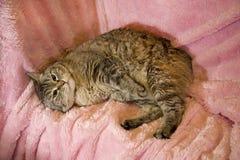 кот получая дом поцарапано Стоковое фото RF