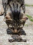 Кот поохотился птица Стоковое Изображение RF