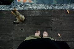Кот попечителя Стоковое Изображение RF