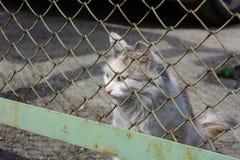 Кот портрета рассеянный молодой белый стоковая фотография rf