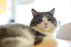 Кот портрета Стоковое Фото