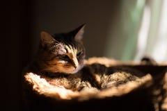 Кот потерянный в мысли Стоковая Фотография