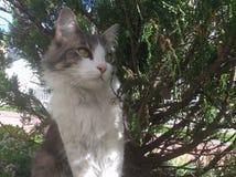Кот под деревом стоковые изображения rf