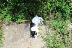 Кот положенный вниз в парк Стоковое Фото