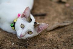 Кот положенный вниз и смотрящ камеру Стоковые Изображения