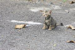 Кот положенный на пол стоковое фото