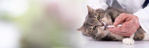 Кот получая лекарство стоковое фото